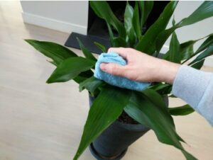 Give Your Plants a Gentle Wipe